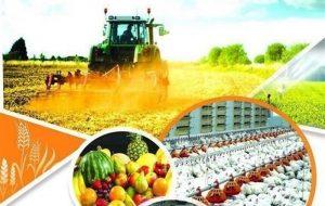 تولید سالانه بیشاز یک میلیون تن انواع محصولات کشاورزی در ایرانشهر