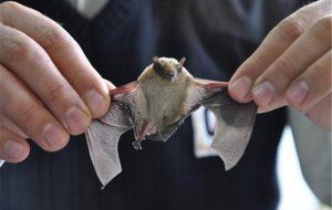 حمله ۱۰ خفاش به خانه مرد اهوازی / همه وحشت کردند + عکس